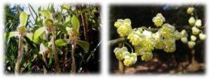 愛知県森林公園 野の花めぐり @ 愛知県森林公園 植物園 | 尾張旭市 | 愛知県 | 日本